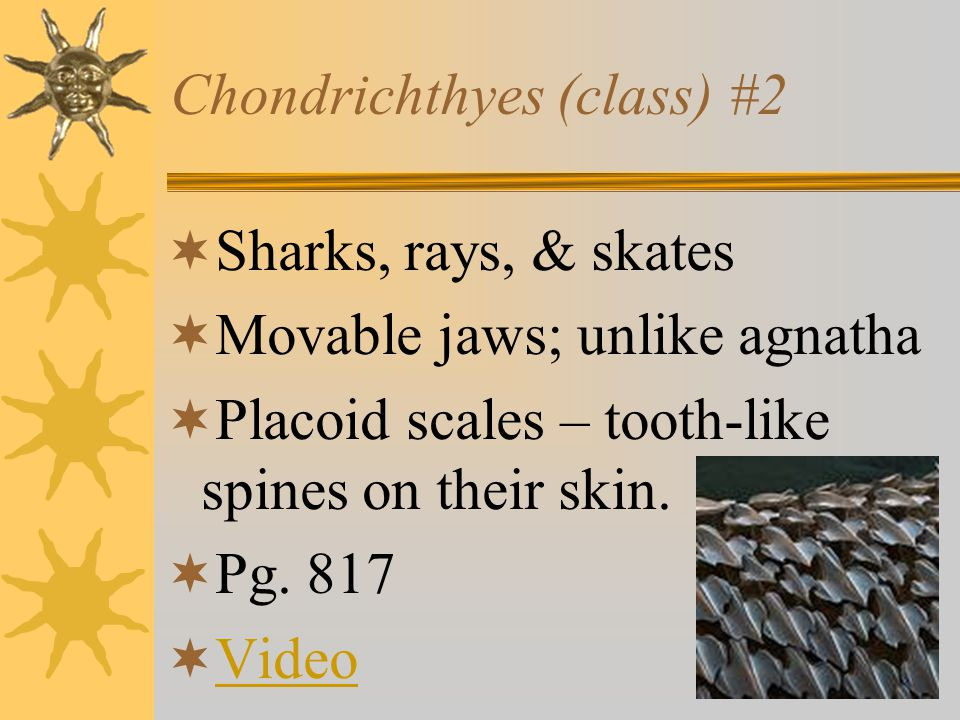 3 Classes of fish  1.