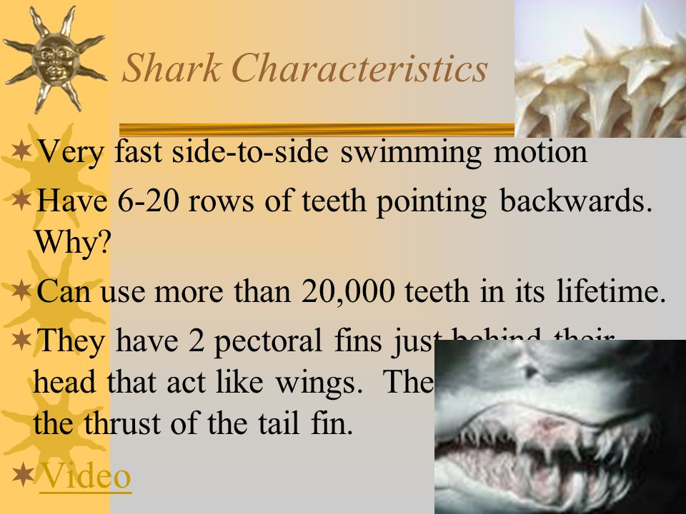 Chondrichthyes (class) #2  Sharks, rays, & skates  Movable jaws; unlike agnatha  Placoid scales – tooth-like spines on their skin.