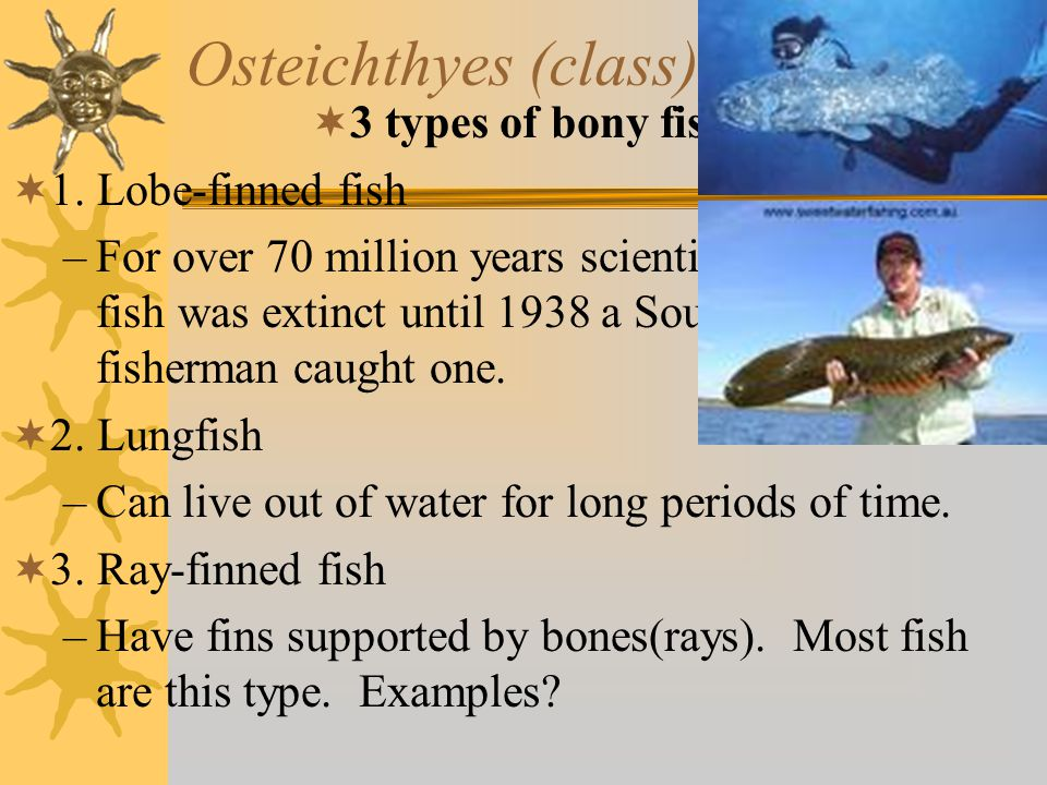 Osteichthyes (class) #3 33 types of bony fish 11.