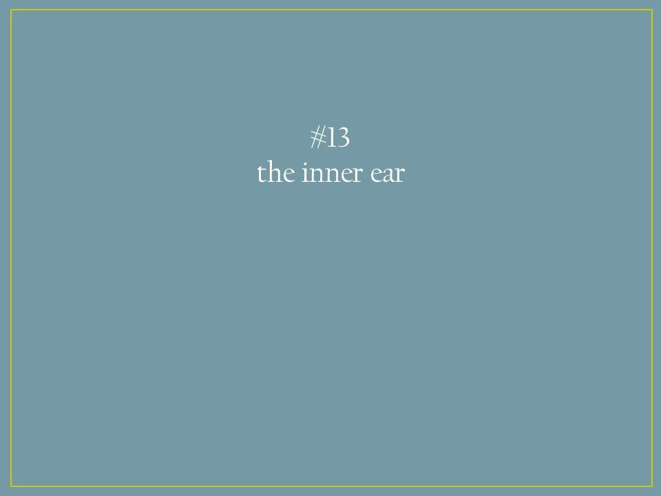 #13 the inner ear