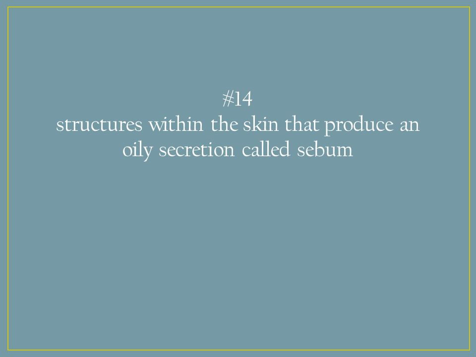 #14 structures within the skin that produce an oily secretion called sebum