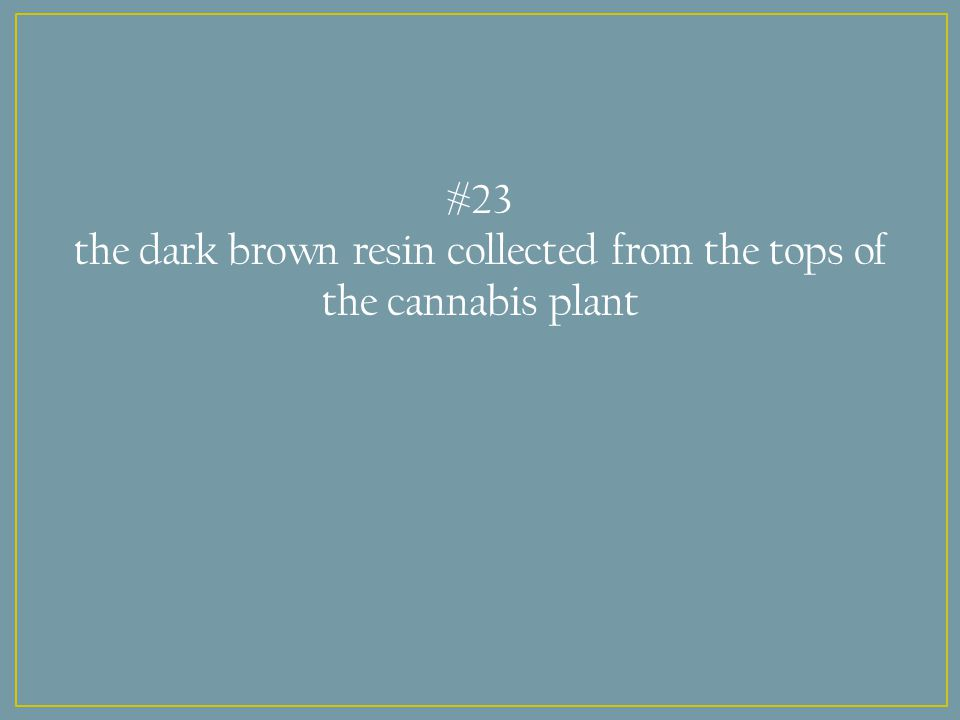 #23 the dark brown resin collected from the tops of the cannabis plant