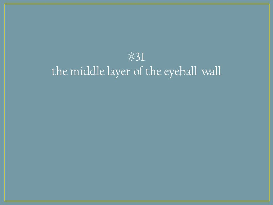 #31 the middle layer of the eyeball wall