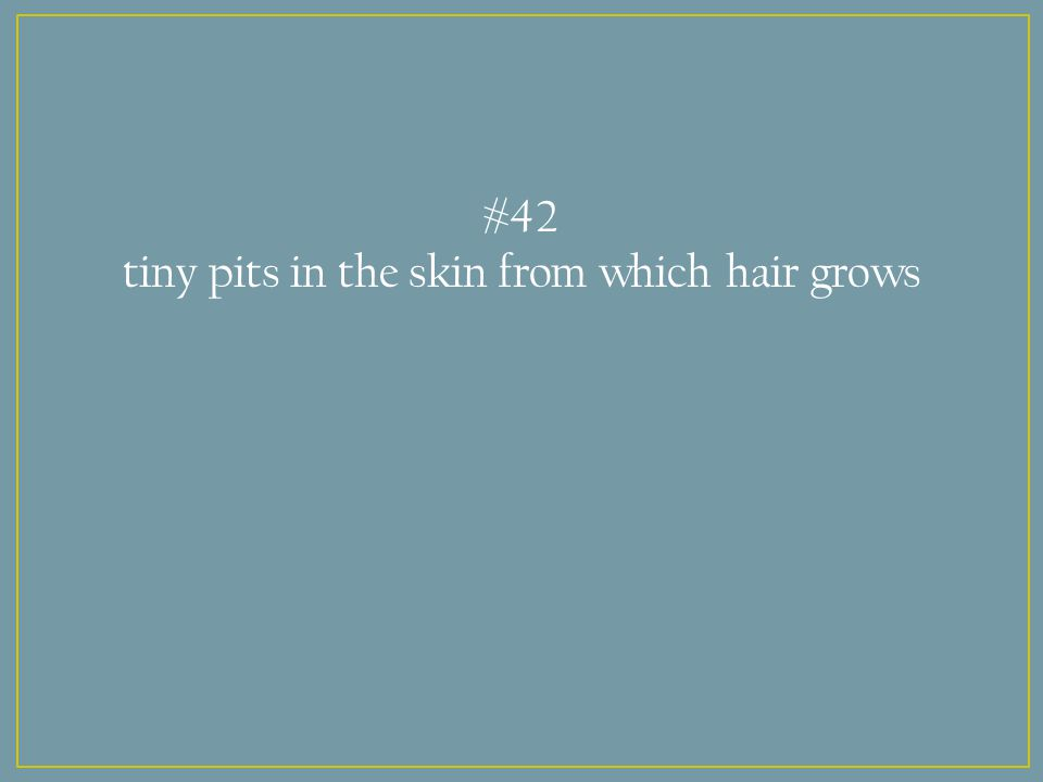 #42 tiny pits in the skin from which hair grows