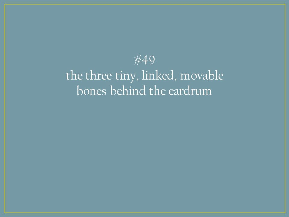 #49 the three tiny, linked, movable bones behind the eardrum