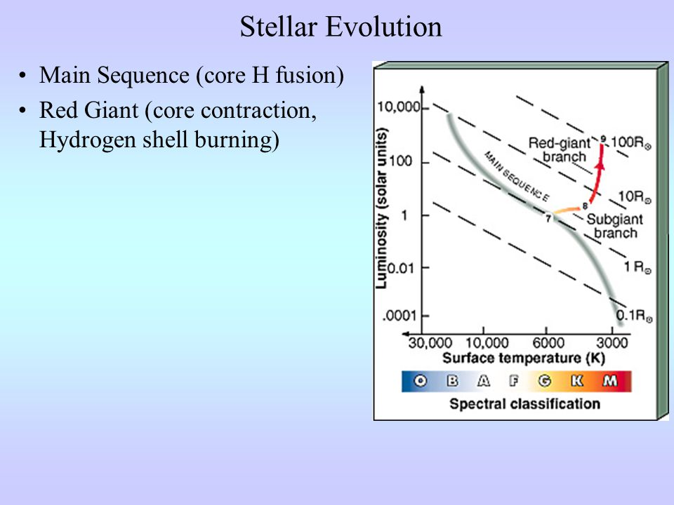 Stellar Evolution Main Sequence (core H fusion) Red Giant (core contraction, Hydrogen shell burning)