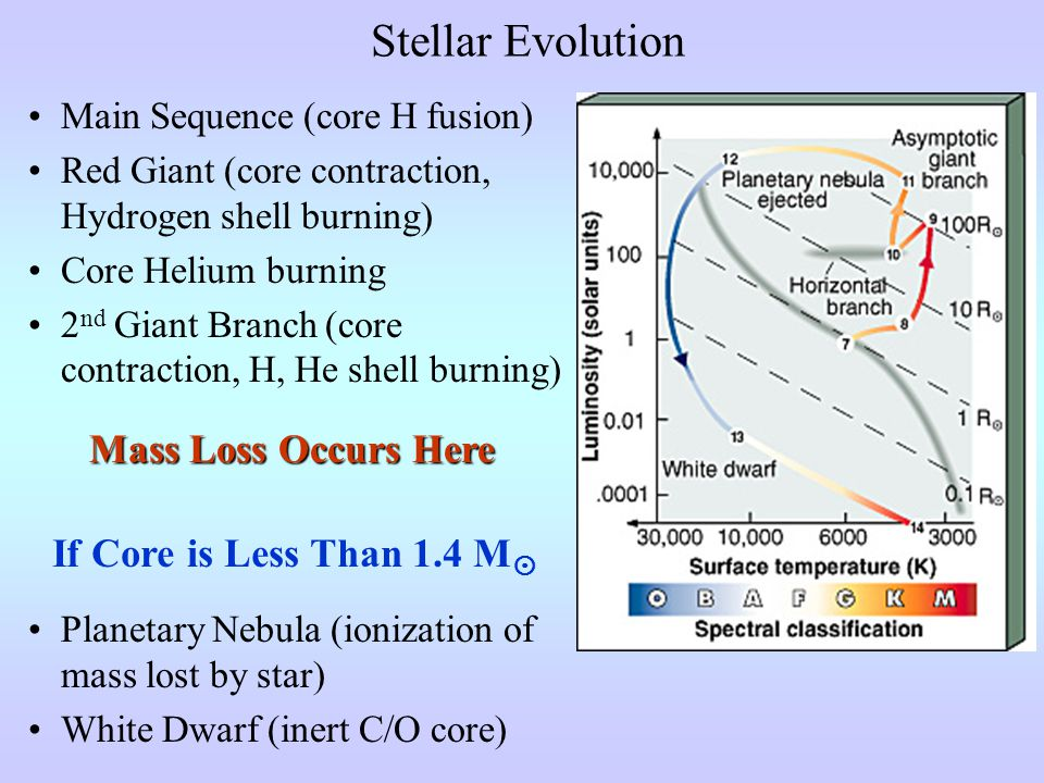Stellar Evolution Main Sequence (core H fusion) Red Giant (core contraction, Hydrogen shell burning) Core Helium burning 2 nd Giant Branch (core contraction, H, He shell burning) Mass Loss Occurs Here If Core is Less Than 1.4 M  Planetary Nebula (ionization of mass lost by star) White Dwarf (inert C/O core)