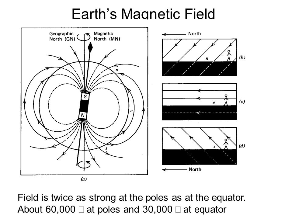 Earth's Magnetic Field Field is twice as strong at the poles as at the equator. About 60,000  at poles and 30,000  at equator From The way the Earth