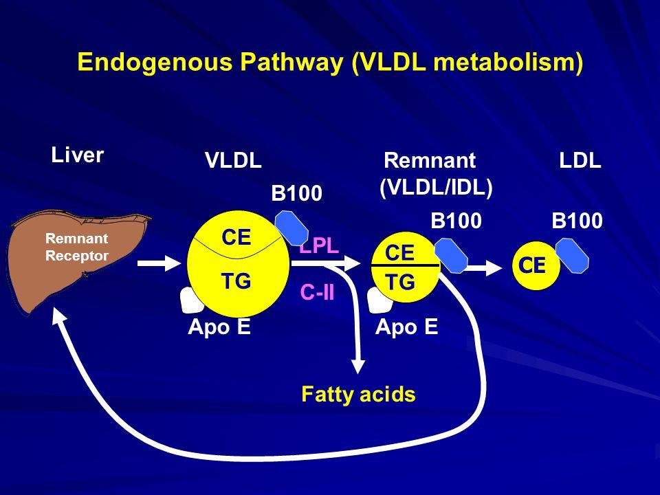 Endogenous Pathway (VLDL metabolism) Apo E B100 CE VLDL Remnant LDL (VLDL/IDL) Liver CE B100 CE TG Remnant Receptor LPL C-II Fatty acids TG B100 CE