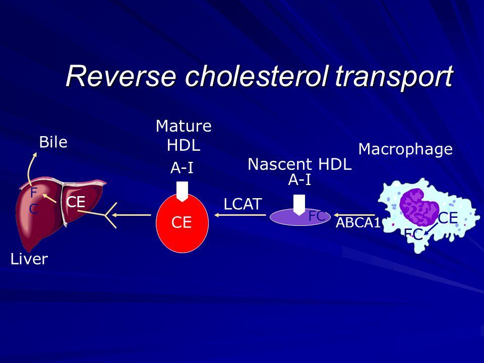 Reverse cholesterol transport A-I Liver CE FC LCAT FCFC Bile A-I ABCA1 Macrophage Mature HDL Nascent HDL FC CE