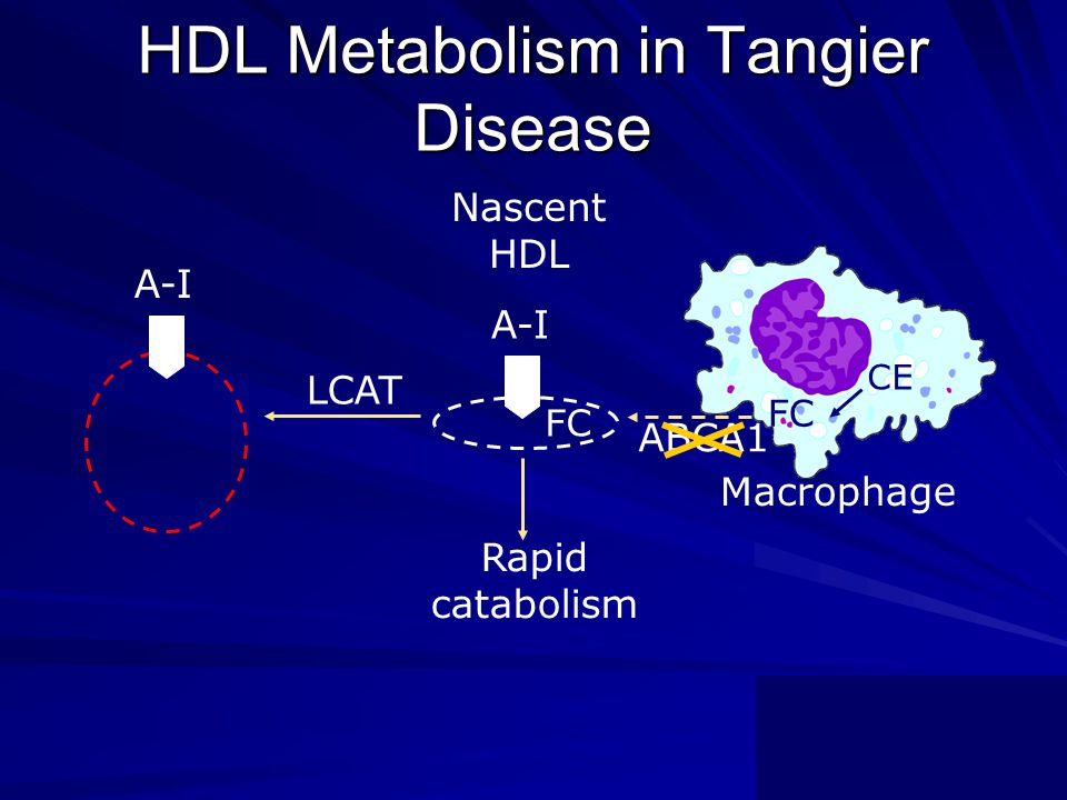 HDL Metabolism in Tangier Disease A-I FC A-I ABCA1 Macrophage Rapid catabolism LCAT Nascent HDL CE