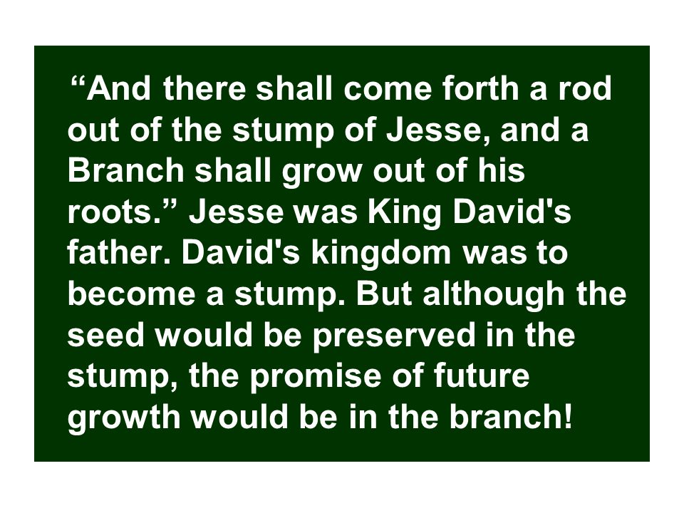 And there shall come forth a rod out of the stump of Jesse, and a Branch shall grow out of his roots. Jesse was King David s father.