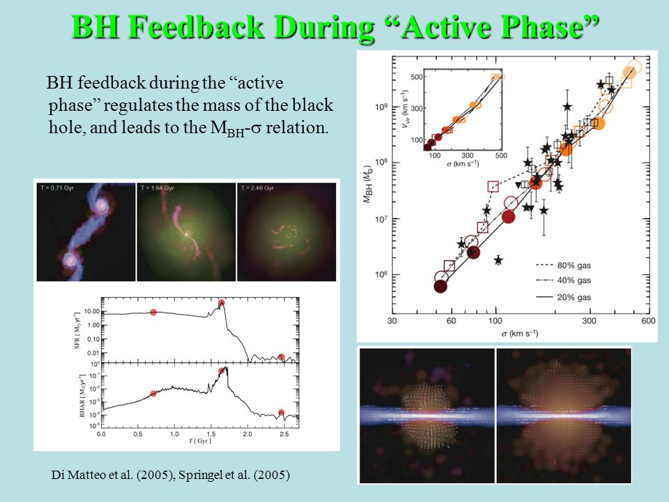 BH feedback during the active phase regulates the mass of the black hole, and leads to the M BH -  relation.