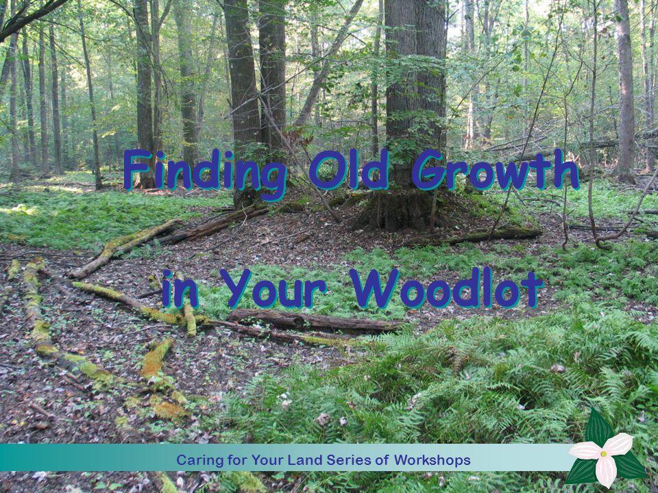 Caring for Your Land Series of Workshop 1 Finding Old Growth in Your Woodlot Caring for Your Land Series of Workshop Caring for Your Land Series of Workshops