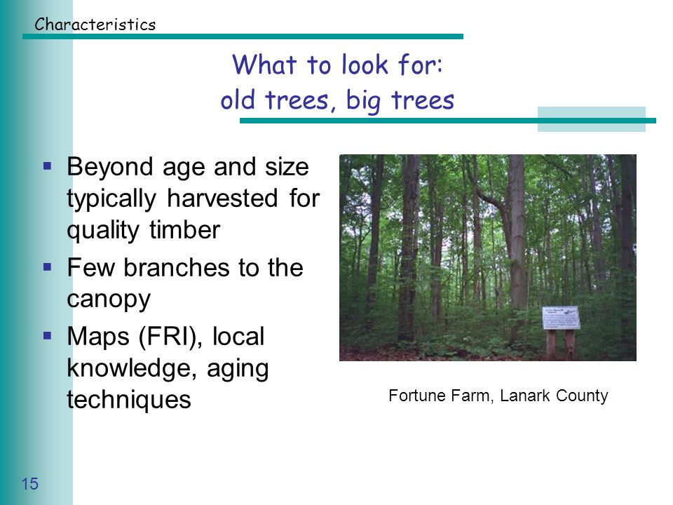Caring for Your Land Series of Workshop 15 What to look for: old trees, big trees  Beyond age and size typically harvested for quality timber  Few branches to the canopy  Maps (FRI), local knowledge, aging techniques Fortune Farm, Lanark County Characteristics