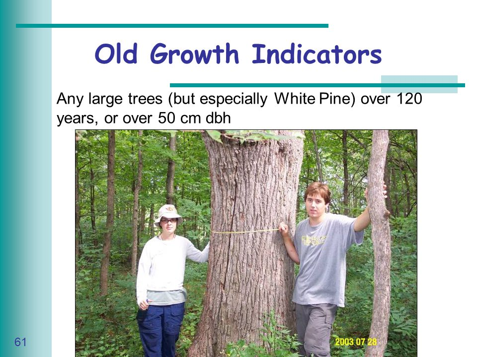 Caring for Your Land Series of Workshop 61 Any large trees (but especially White Pine) over 120 years, or over 50 cm dbh Old Growth Indicators