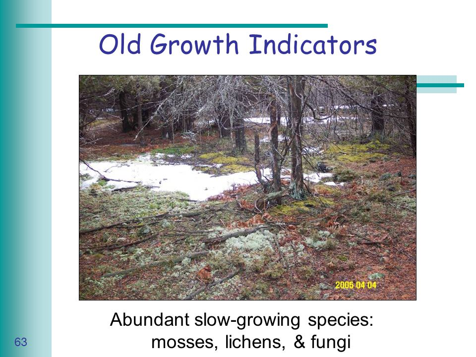 Caring for Your Land Series of Workshop 63 Old Growth Indicators Abundant slow-growing species: mosses, lichens, & fungi