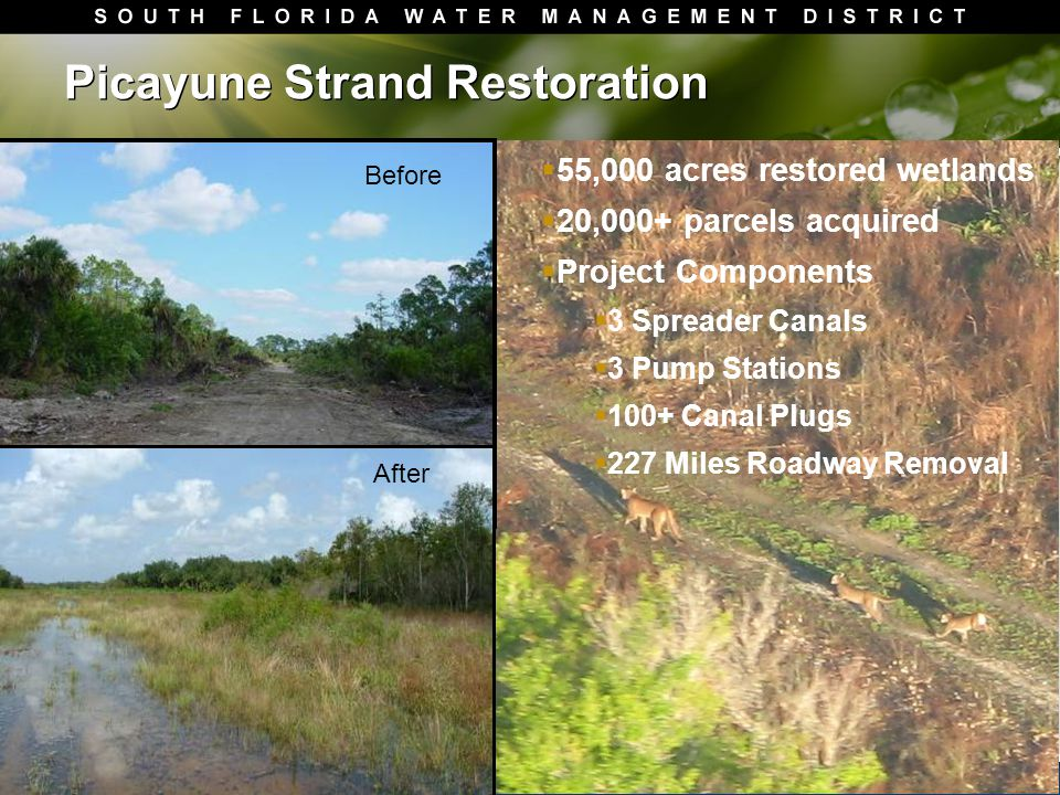 Picayune Strand Restoration  55,000 acres restored wetlands  20,000+ parcels acquired  Project Components  3 Spreader Canals  3 Pump Stations  100+ Canal Plugs  227 Miles Roadway Removal Before After