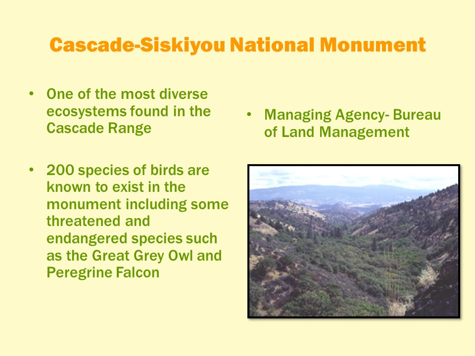 Cascade-Siskiyou National Monument One of the most diverse ecosystems found in the Cascade Range 200 species of birds are known to exist in the monument including some threatened and endangered species such as the Great Grey Owl and Peregrine Falcon Managing Agency- Bureau of Land Management