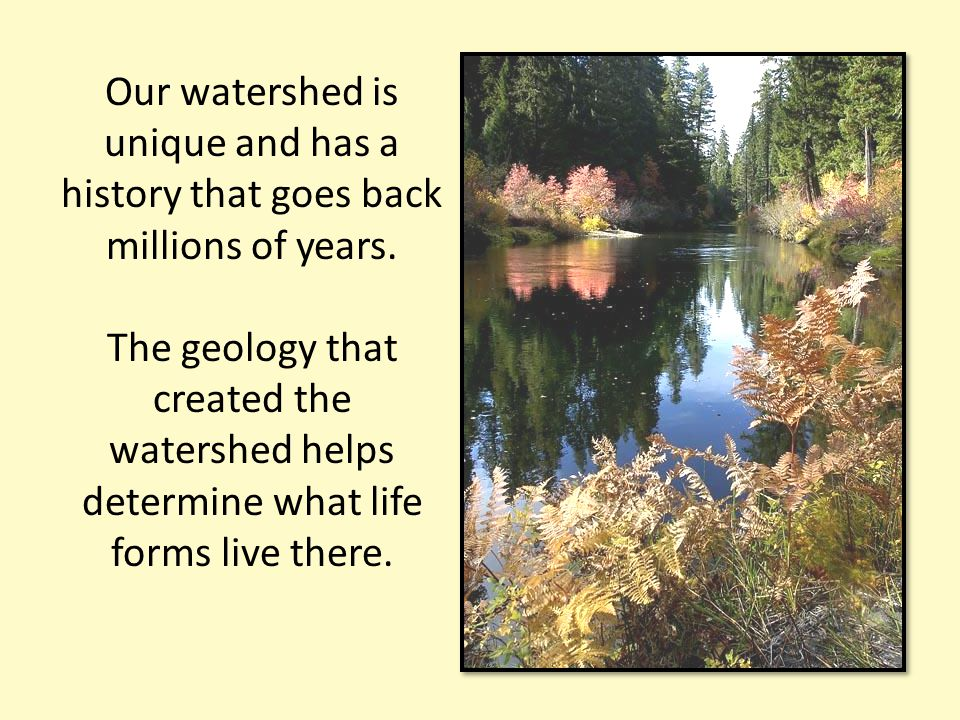Our watershed is unique and has a history that goes back millions of years. The geology that created the watershed helps determine what life forms liv