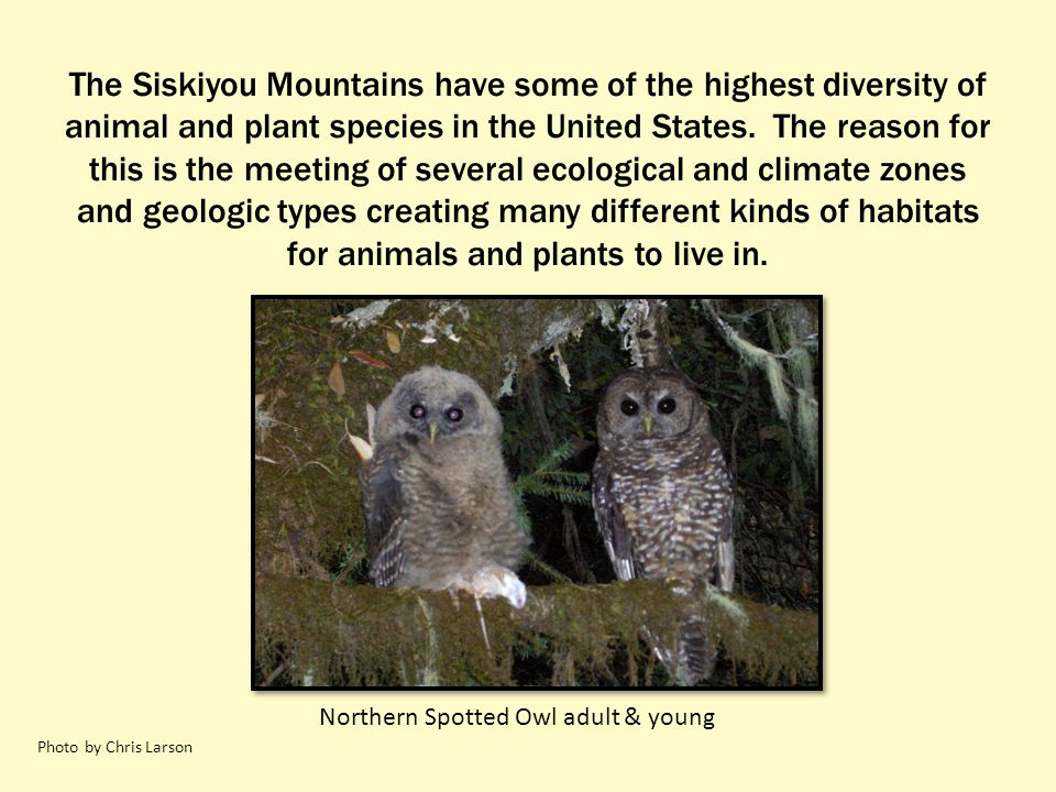 The Siskiyou Mountains have some of the highest diversity of animal and plant species in the United States. The reason for this is the meeting of seve