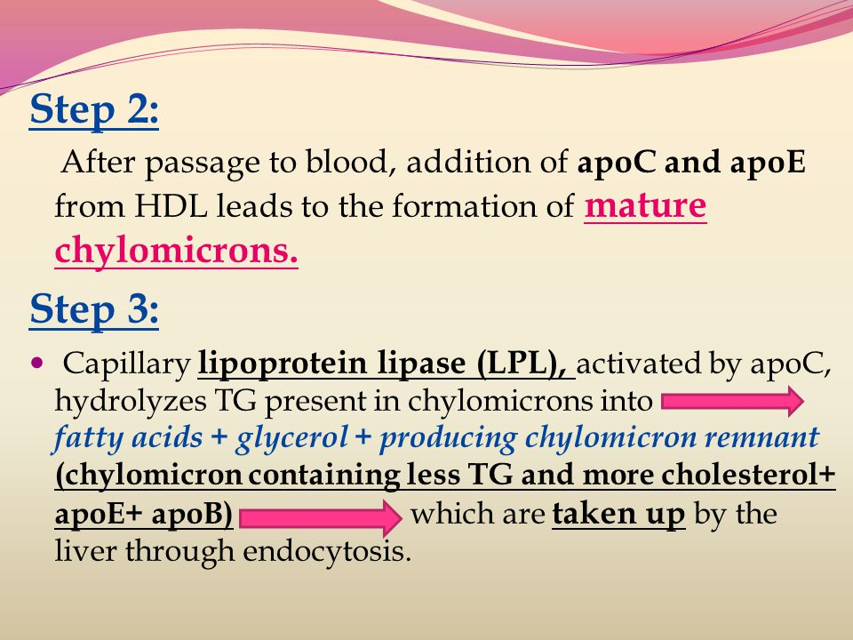 Step 2: After passage to blood, addition of apoC and apoE from HDL leads to the formation of mature chylomicrons.
