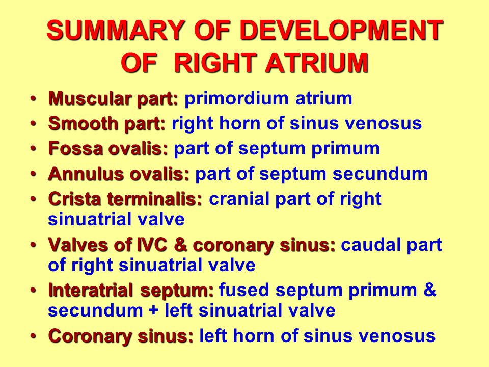 SUMMARY OF DEVELOPMENT OF RIGHT ATRIUM Muscular part:Muscular part: primordium atrium Smooth part:Smooth part: right horn of sinus venosus Fossa ovalis:Fossa ovalis: part of septum primum Annulus ovalis:Annulus ovalis: part of septum secundum Crista terminalis:Crista terminalis: cranial part of right sinuatrial valve Valves of IVC & coronary sinus:Valves of IVC & coronary sinus: caudal part of right sinuatrial valve Interatrial septum:Interatrial septum: fused septum primum & secundum + left sinuatrial valve Coronary sinus:Coronary sinus: left horn of sinus venosus