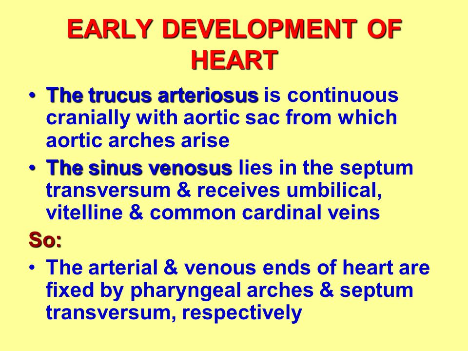 EARLY DEVELOPMENT OF HEART grow fasterThe bulbus cordis & ventricle grow faster than atrium & sinus venosus: U-shaped loop 1.The heart bends upon itself forming a U-shaped loop dorsal 2.The atrium and sinus venosus become dorsal (transverse pericardial sinus)after degeneration of dorsal mesocardium 3.A track is formed between arterial & venous end (transverse pericardial sinus) after degeneration of dorsal mesocardium