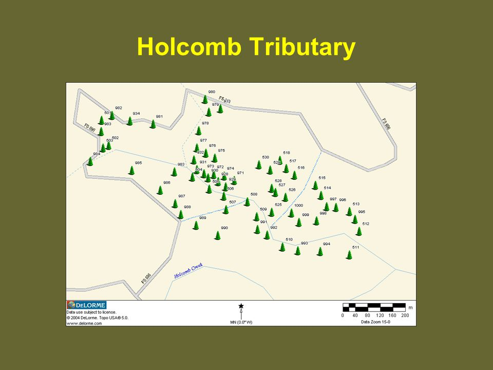 Holcomb Tributary