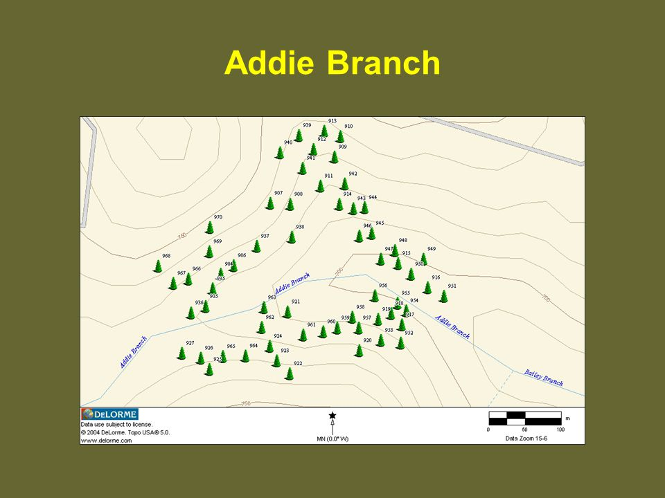 Addie Branch