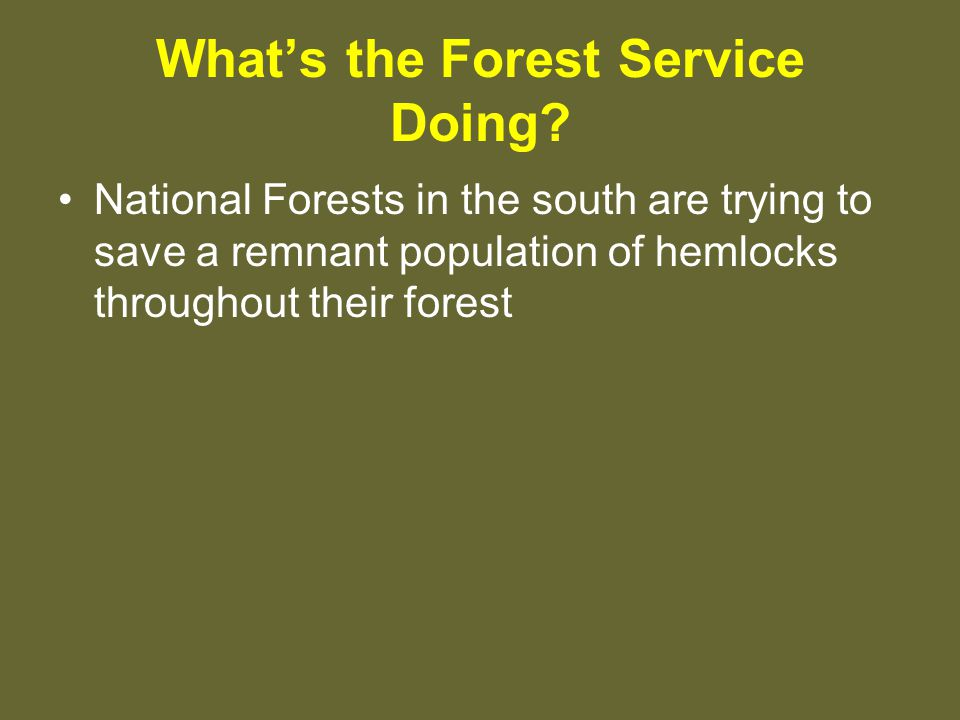 What's the Forest Service Doing.