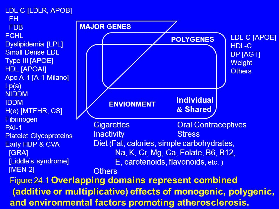 ENVIONMENT Individual & Shared POLYGENES MAJOR GENES CigarettesOral Contraceptives InactivityStress Diet ( Fat, calories, simple carbohydrates, Na, K, Cr, Mg, Ca, Folate, B6, B12, E, carotenoids, flavonoids, etc.