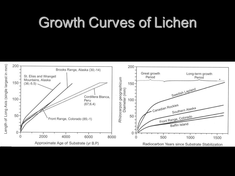 Growth Curves of Lichen
