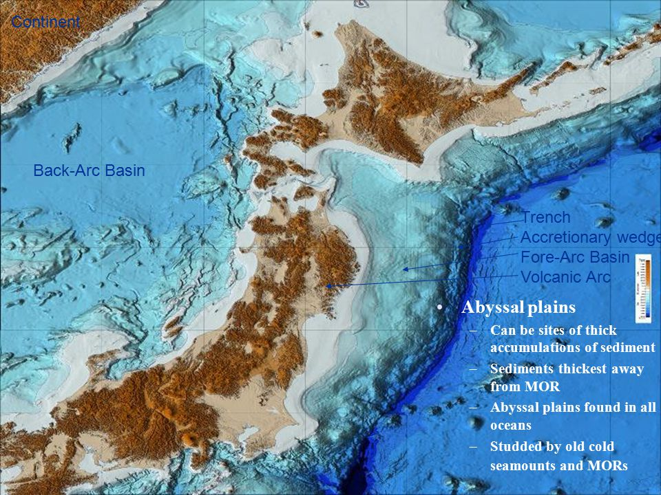 Abyssal plains –Can be sites of thick accumulations of sediment –Sediments thickest away from MOR –Abyssal plains found in all oceans –Studded by old cold seamounts and MORs Trench Accretionary wedge Fore-Arc Basin Volcanic Arc Back-Arc Basin Continent