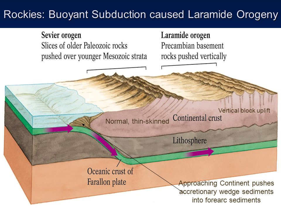 Rockies: Buoyant Subduction caused Laramide Orogeny Normal, thin-skinned Vertical block uplift Approaching Continent pushes accretionary wedge sediments into forearc sediments