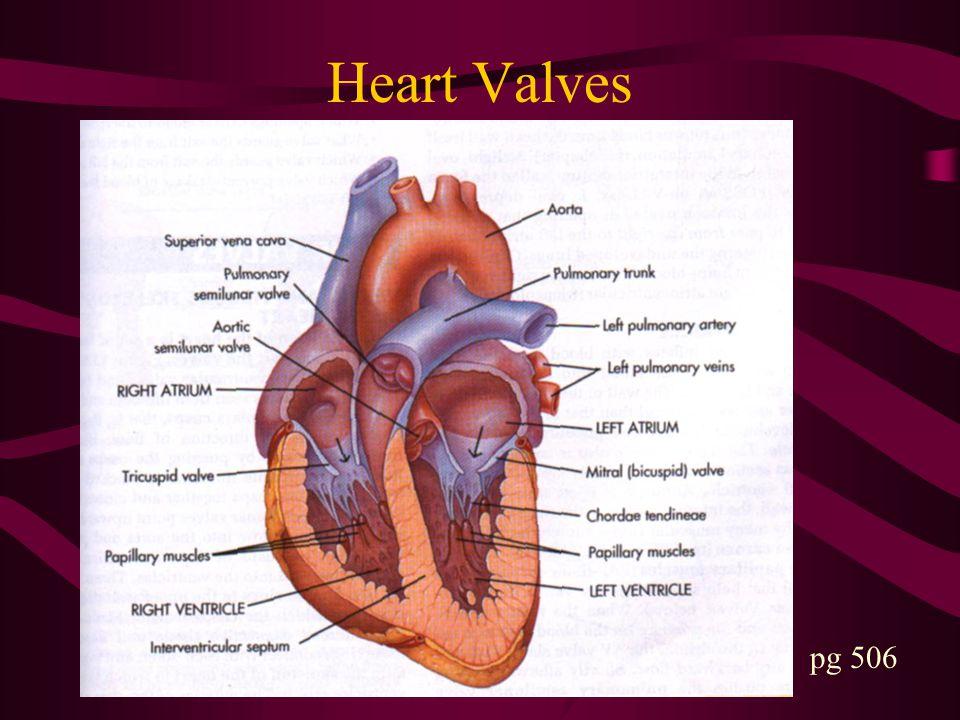 Heart Valves pg 506
