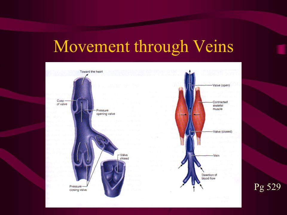 Movement through Veins Pg 529