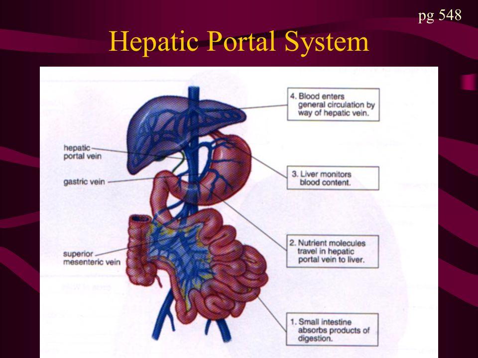 Hepatic Portal System pg 548
