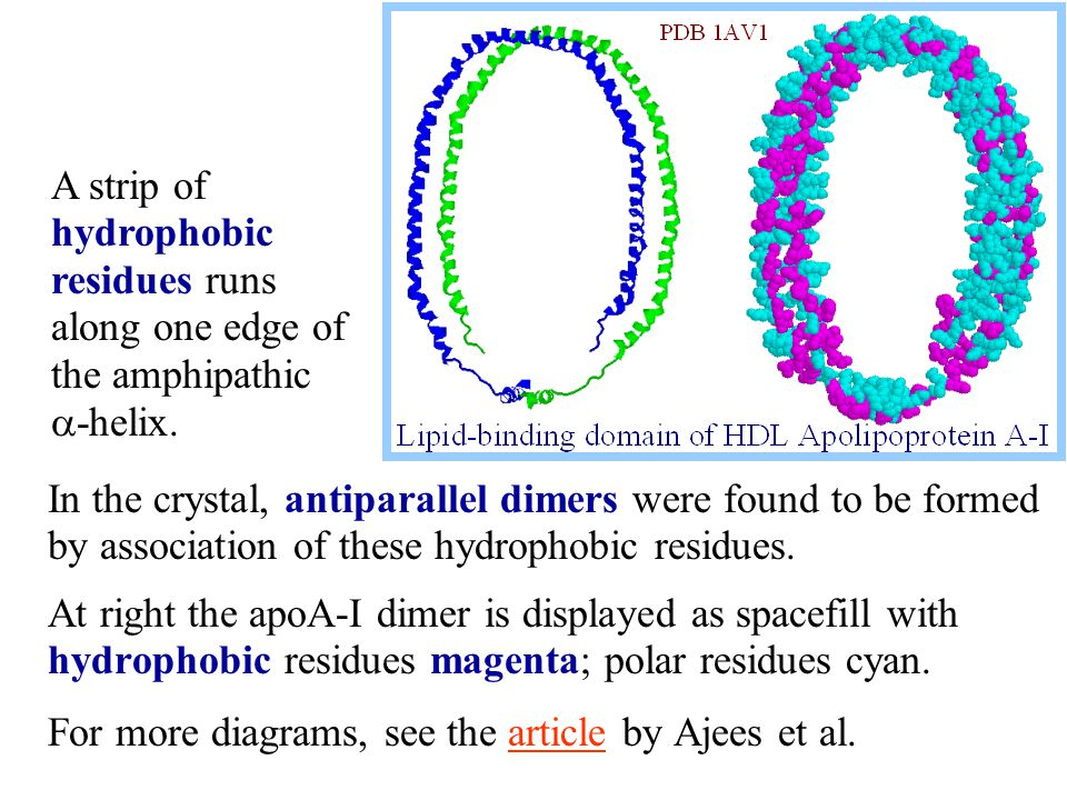 In the crystal, antiparallel dimers were found to be formed by association of these hydrophobic residues.