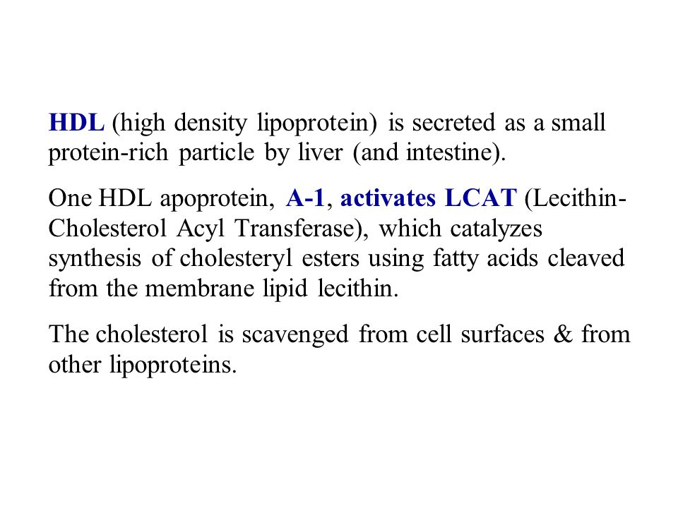 HDL (high density lipoprotein) is secreted as a small protein-rich particle by liver (and intestine).