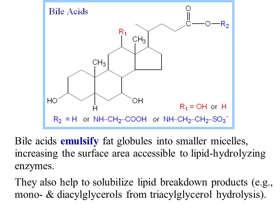 Bile acids emulsify fat globules into smaller micelles, increasing the surface area accessible to lipid-hydrolyzing enzymes.
