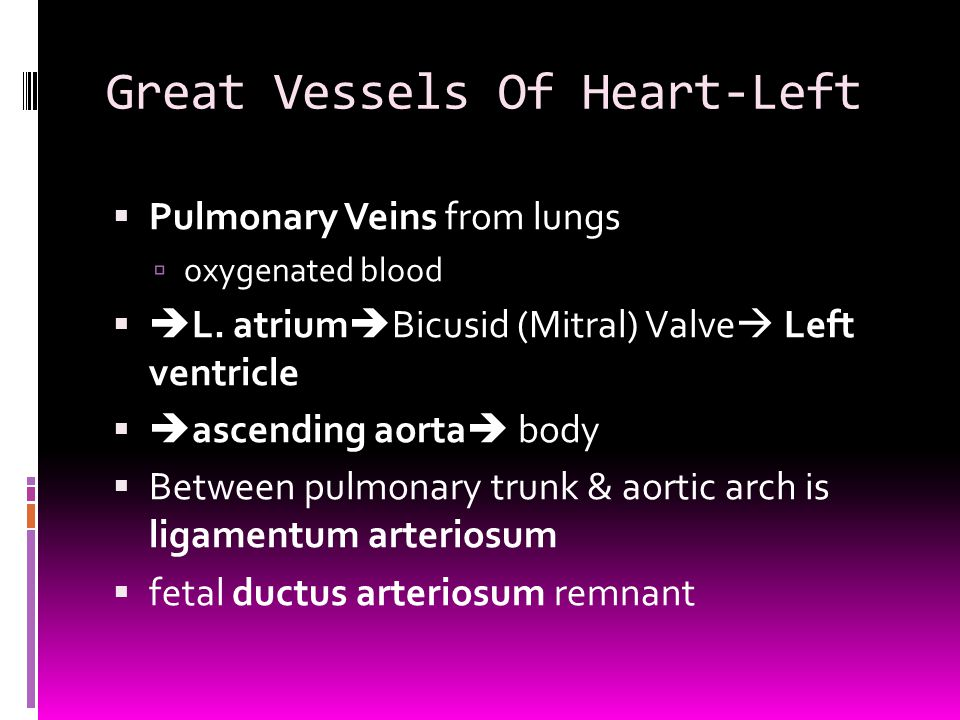 Great Vessels Of Heart-Left  Pulmonary Veins from lungs  oxygenated blood   L. atrium  Bicusid (Mitral) Valve  Left ventricle   ascending aort
