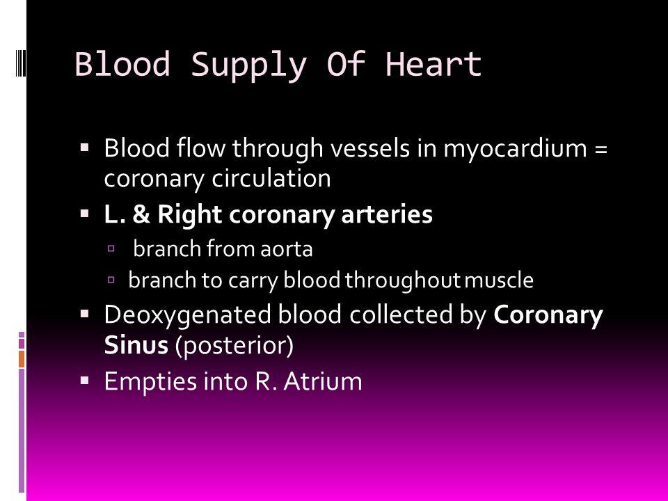 Blood Supply Of Heart  Blood flow through vessels in myocardium = coronary circulation  L. & Right coronary arteries  branch from aorta  branch to