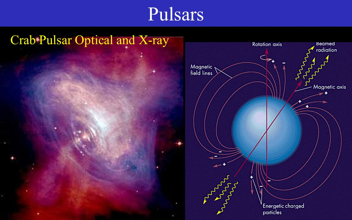 Pulsars Molecular Cloud Protostar Main Sequence Supergiant Stages Massive Star Supernova Neutron Star or Black Hole Most stars spin Shrinking core spins faster Magnetic fields, trapped, get concentrated Whirling strong magnet Charged particles get whipped around by magnet - they radiate Lighthouse effect