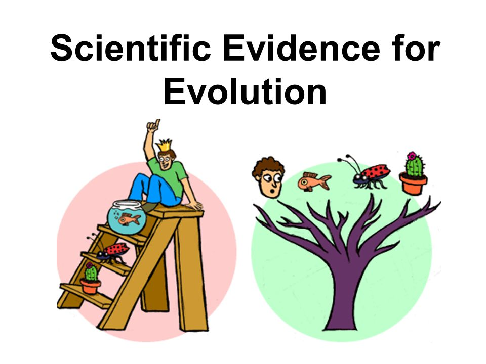 Scientific Evidence for Evolution