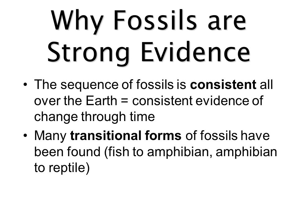 Why Fossils are Strong Evidence The sequence of fossils is consistent all over the Earth = consistent evidence of change through time Many transitiona
