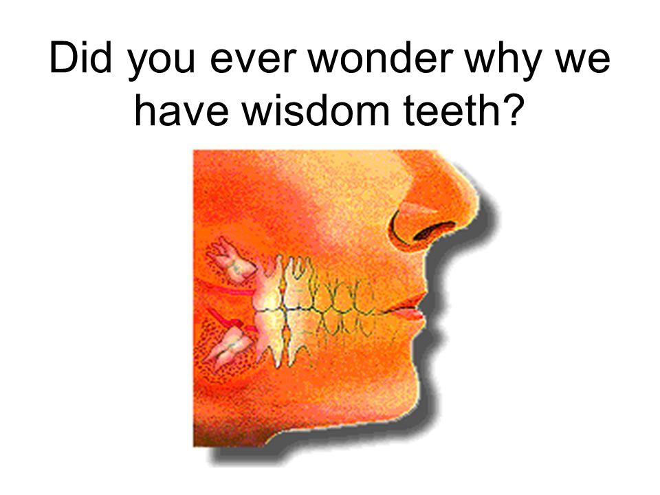 Did you ever wonder why we have wisdom teeth?