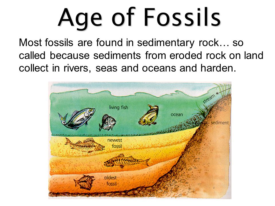 Age of Fossils Over millions of years, the shifting of the earth's crust has raised some regions that one were under the seas and the layers are visible.