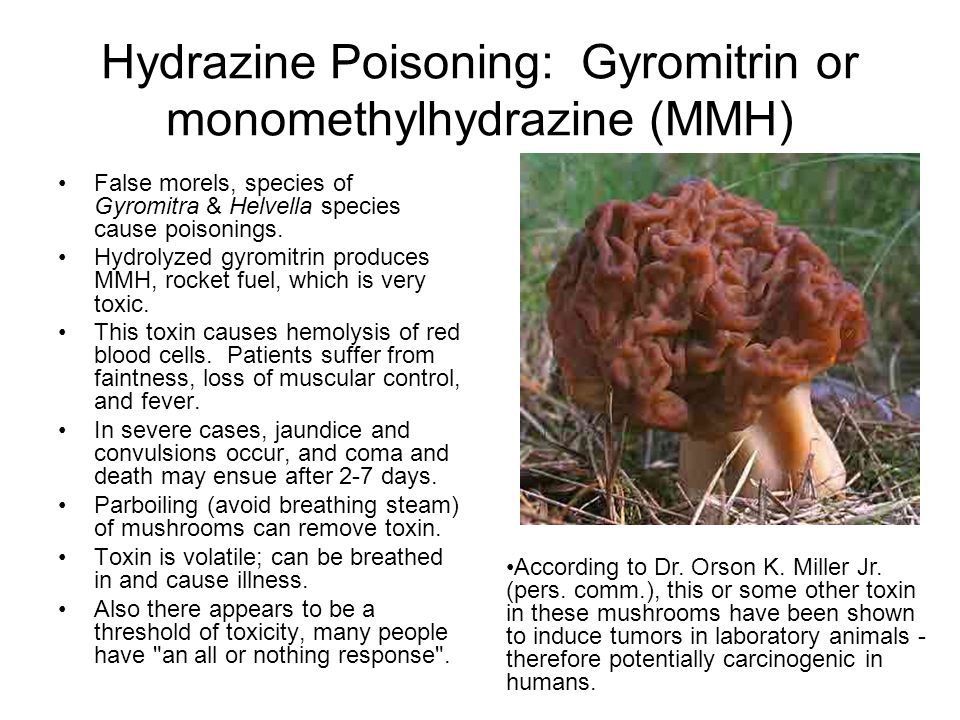 Hydrazine Poisoning: Gyromitrin or monomethylhydrazine (MMH) False morels, species of Gyromitra & Helvella species cause poisonings.