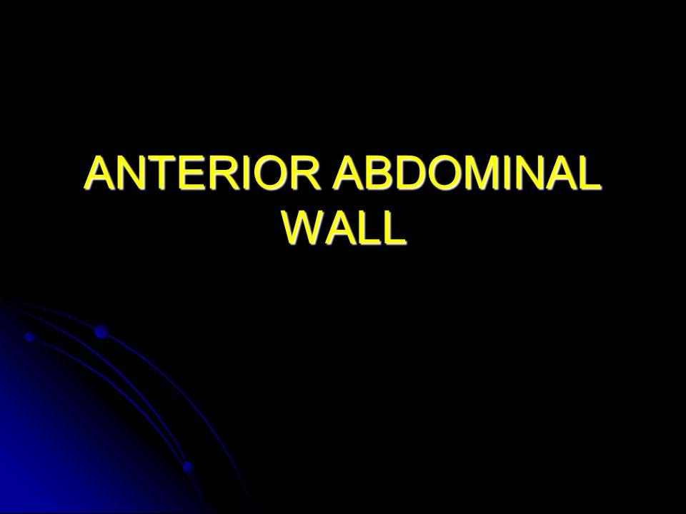 Anterior Abdominal Wall Arteries Deep circumflex iliac artery: Deep circumflex iliac artery: Branch of external iliac.